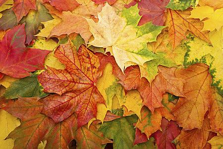 fall-in-rockford