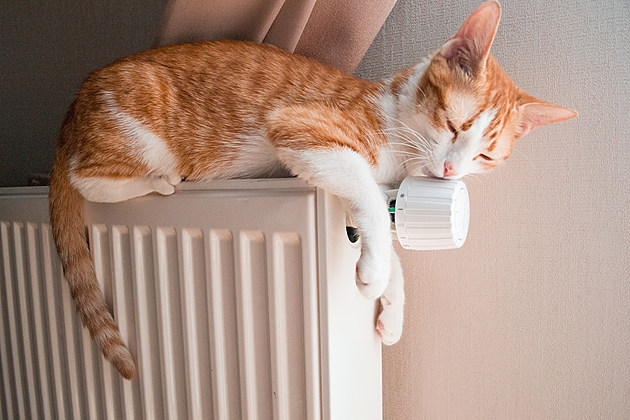 Red cat relaxing on a warm radiator